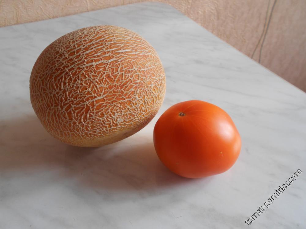 Дыня колхозница с томатом оранжевый гигант