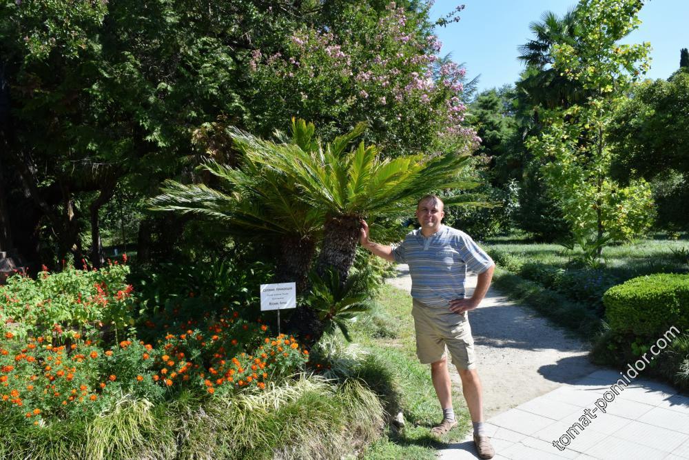 Ботанический сад (г.Сухум)