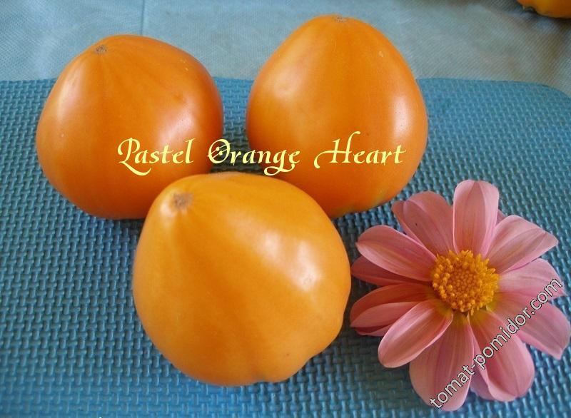 Пастель Оранжевое Сердце (Pastel Orange Heart)