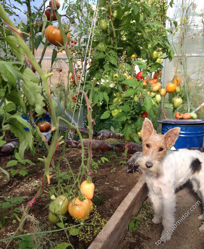 Ну охраняю я ваши помидоры!