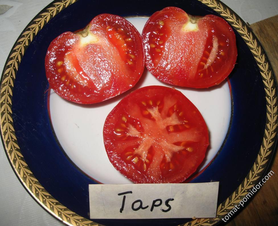 Taps - разрез