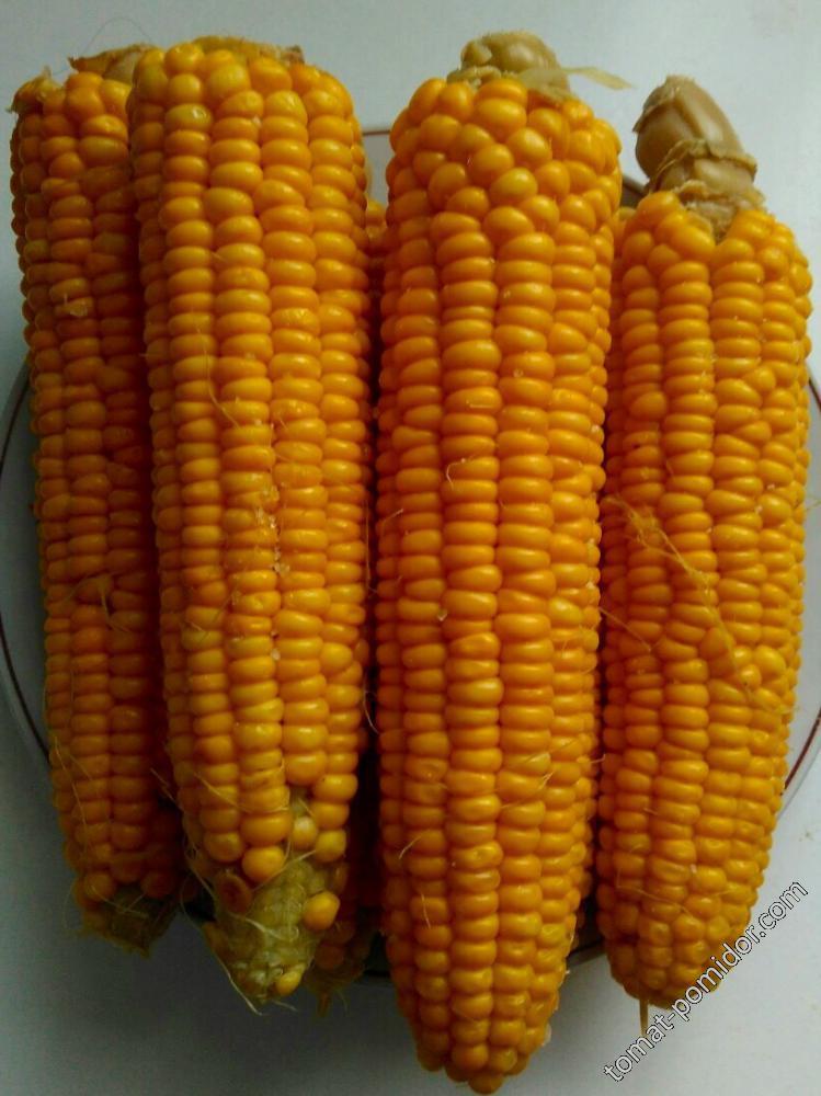 Кукурузка