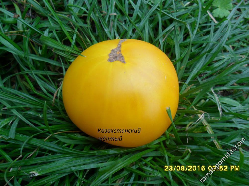 казахстанский жёлтый