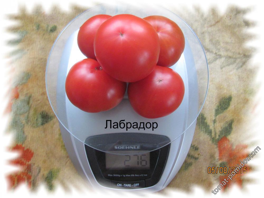 томаты 2015