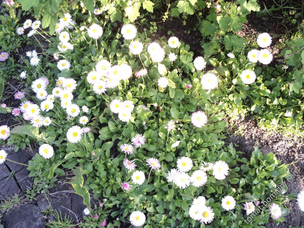 цветики