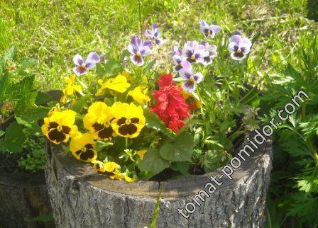 Пенечки с цветами