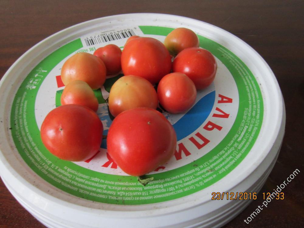 эксперимент с томатами 2016/17 гг