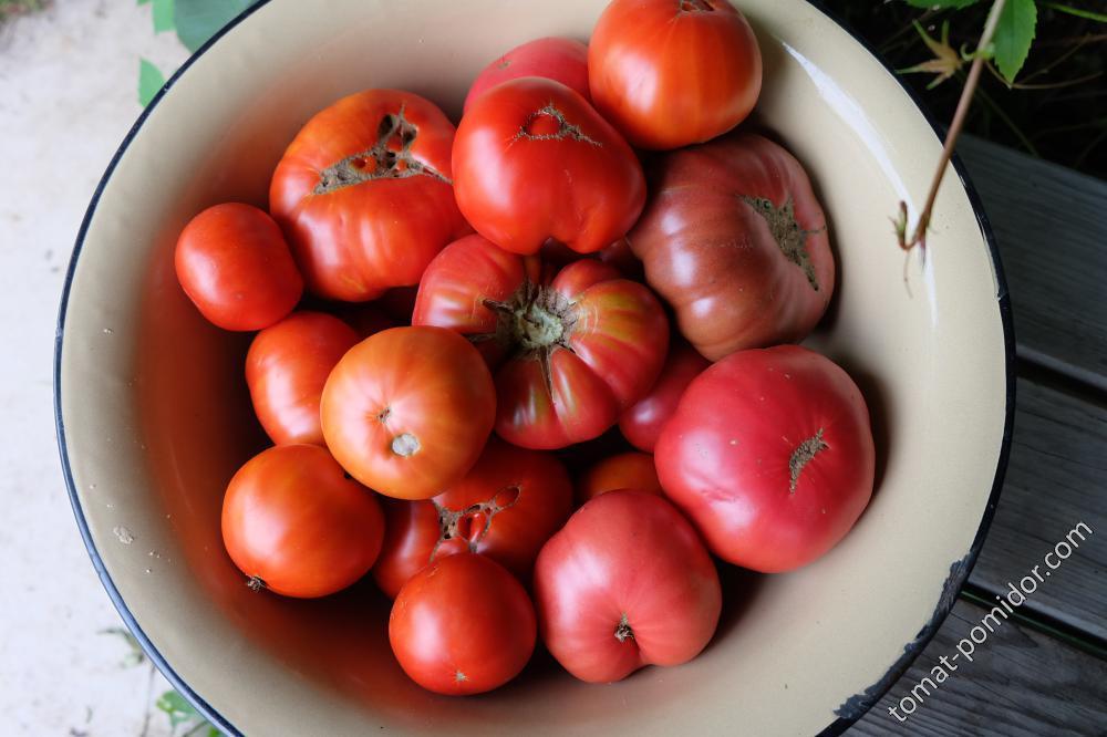 Уральские томаты