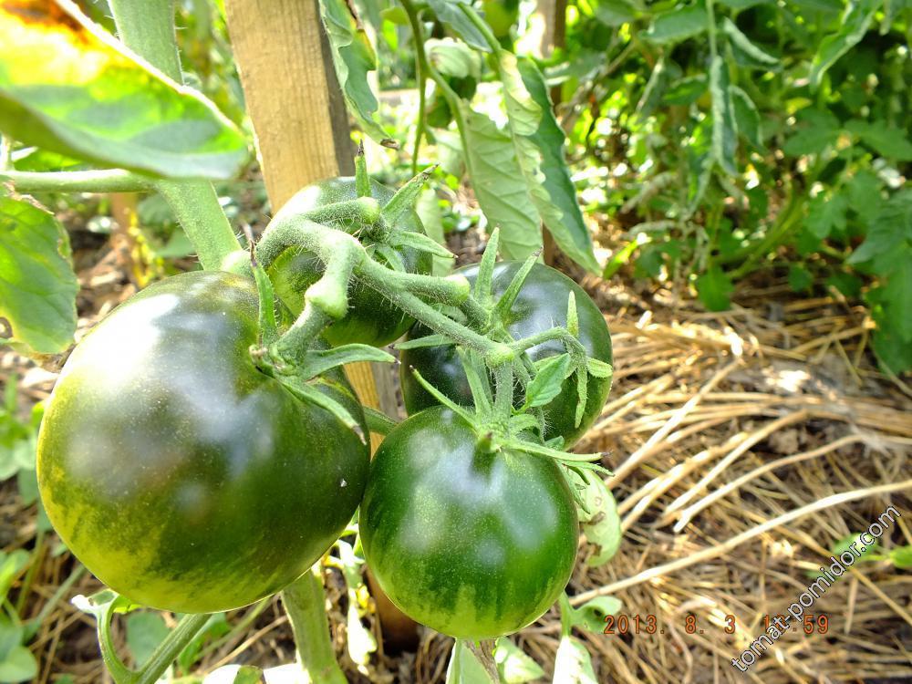 помидорик1
