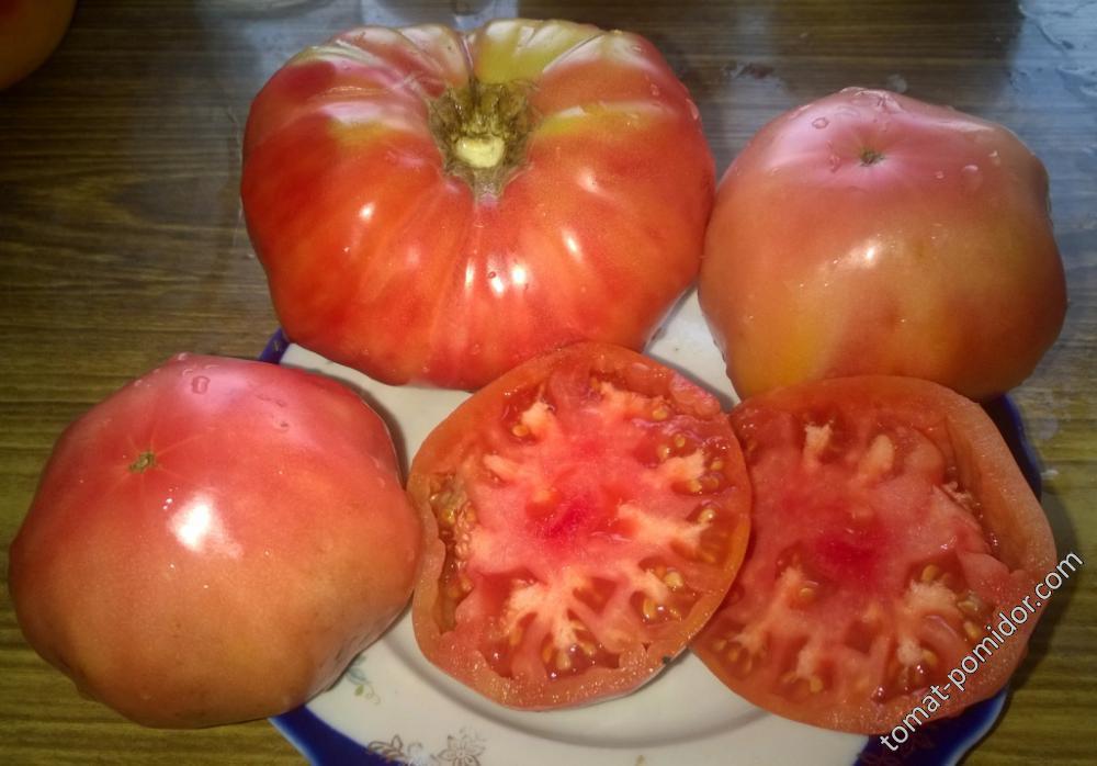 Памяти корнеева томат