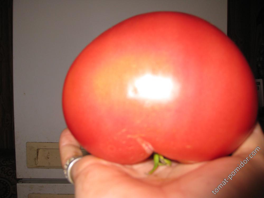 томат.