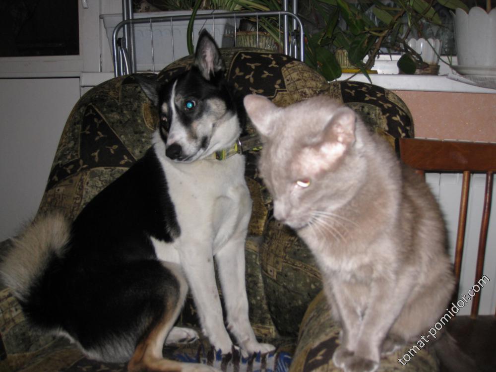 кот и пёс -братья на век.