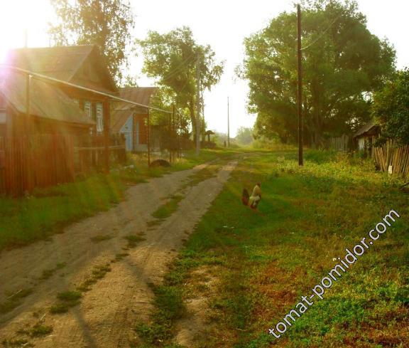 Утро в деревне.