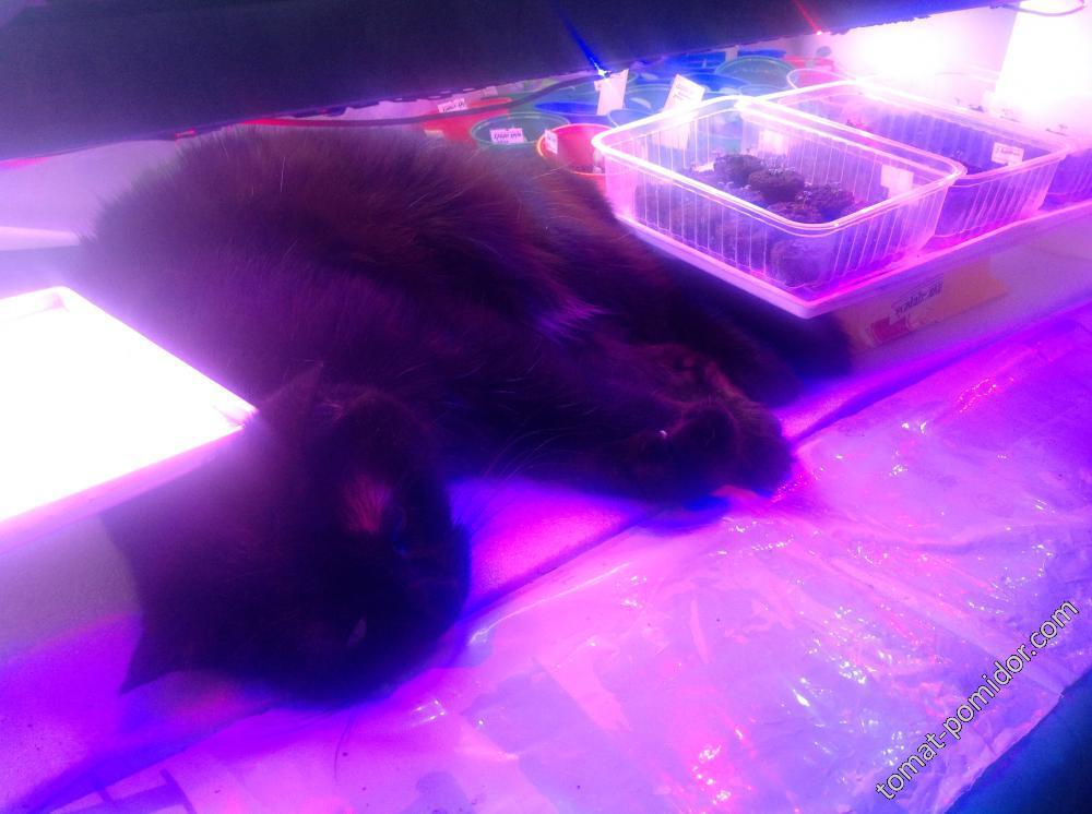 Маргоша в тепле под досветкой