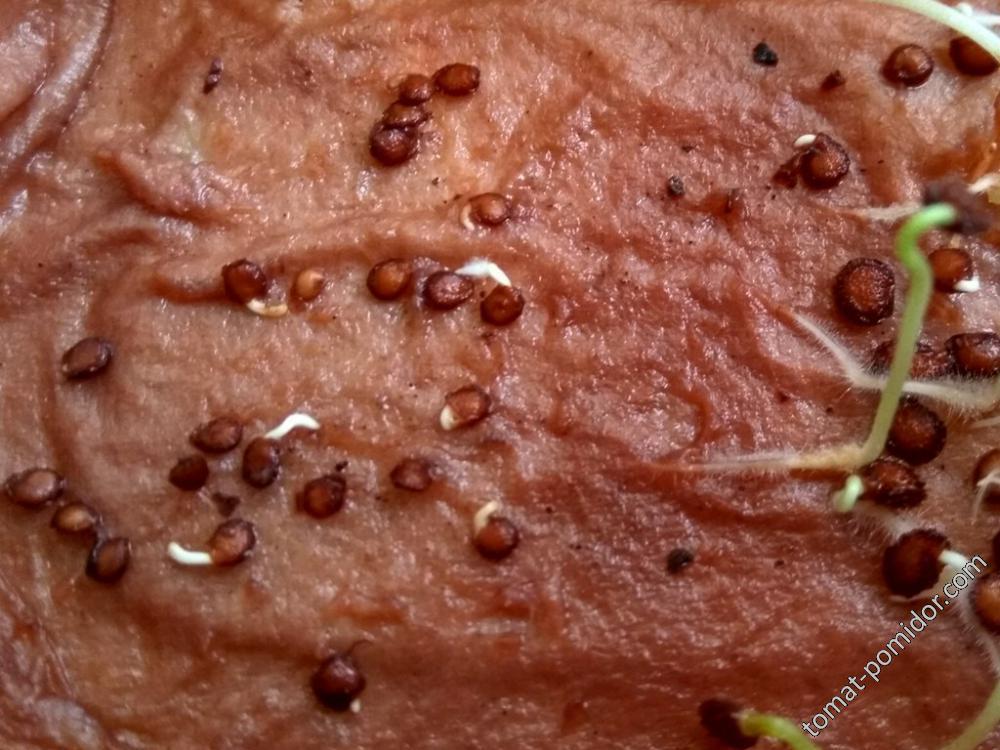 Обрезание на семенах