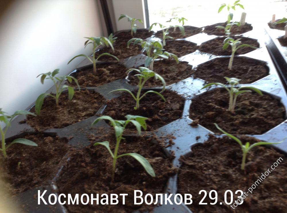 Космонавт Волков