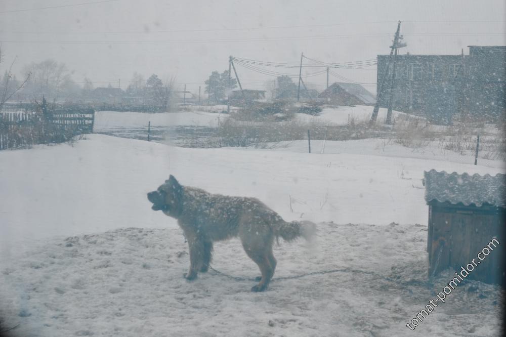 Бабайка зиму пугает))