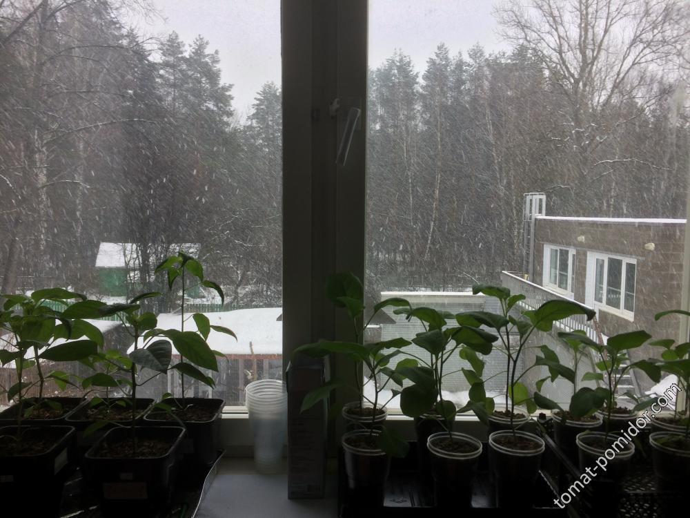 Зима!!!!! Снег стеной...