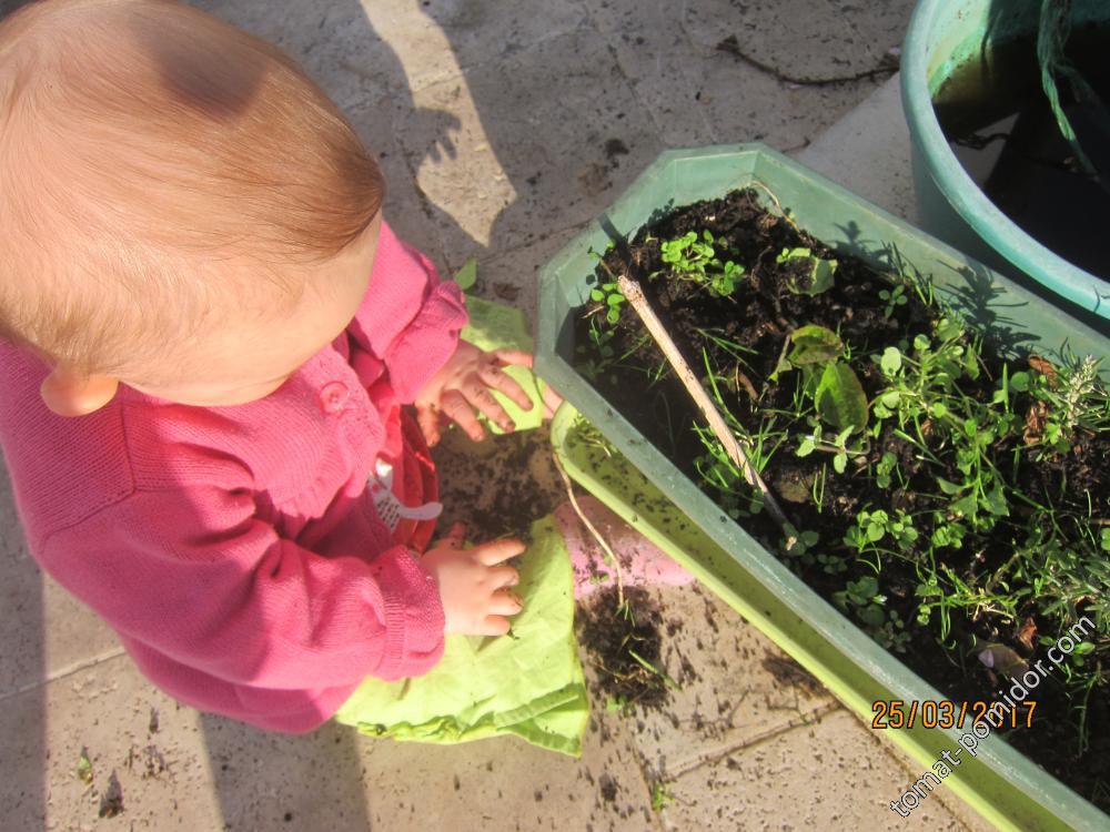 Первые жертвы молодой огородницы :)