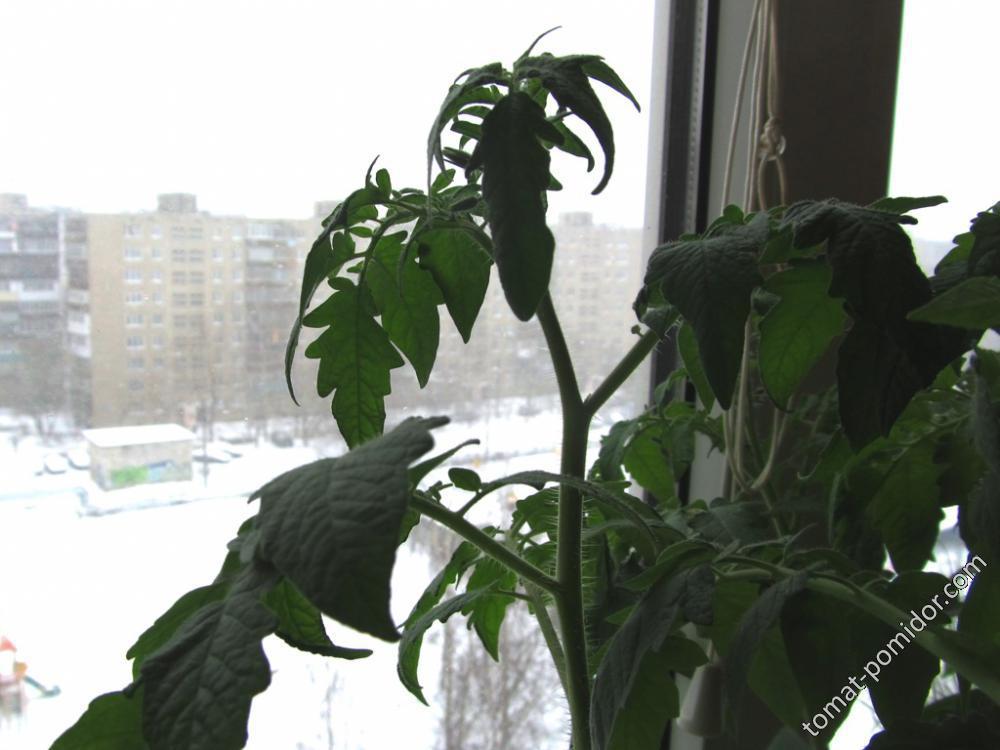 Рассада зимой в конце апреля )