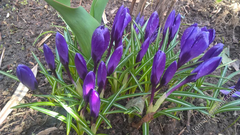 первые цветы  на даче