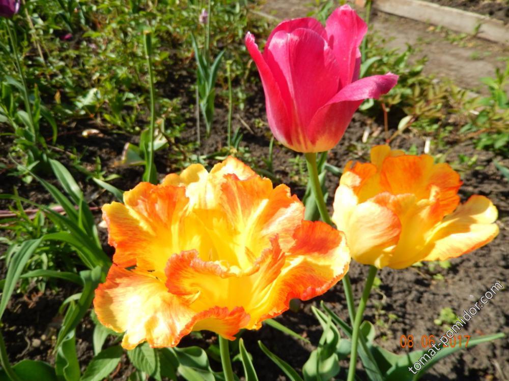 Цветы многолетние