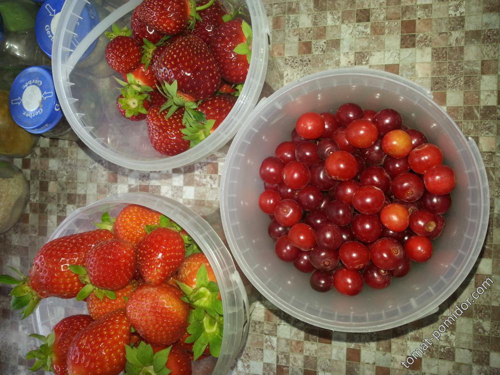 мальвина вишневого цвета справа