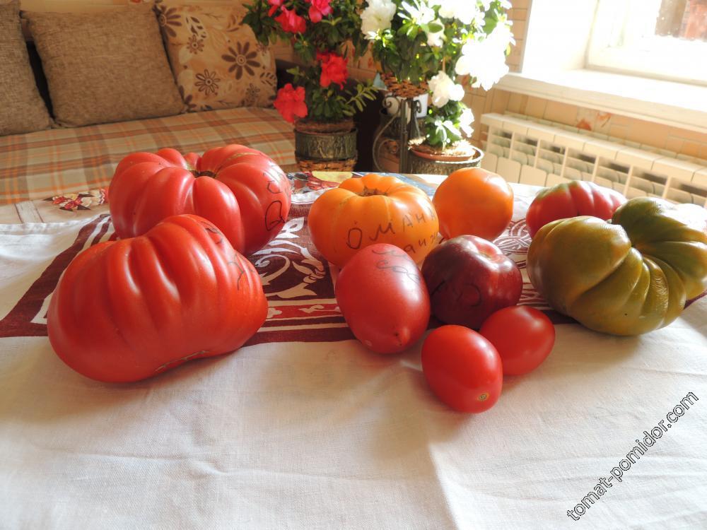 Семенные помидорки
