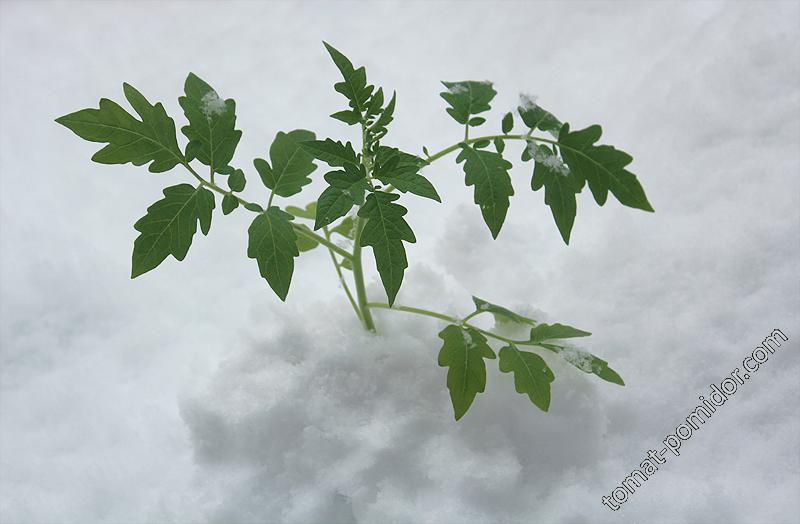 Ильди в снегу