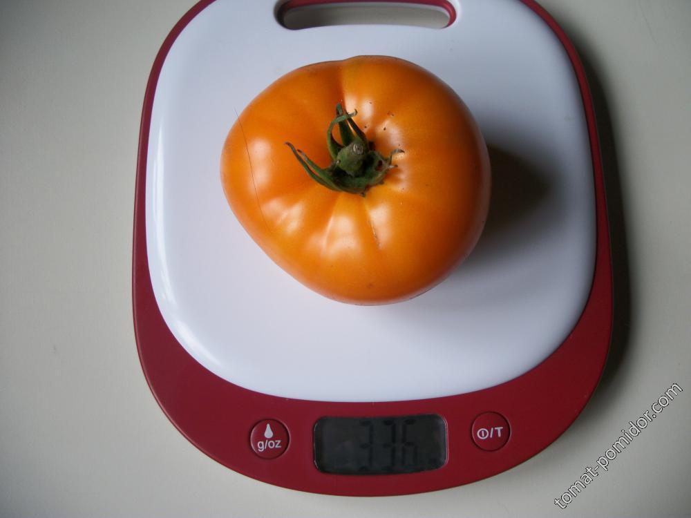 томат Cero Blackburn