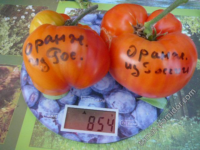 оранж.из России
