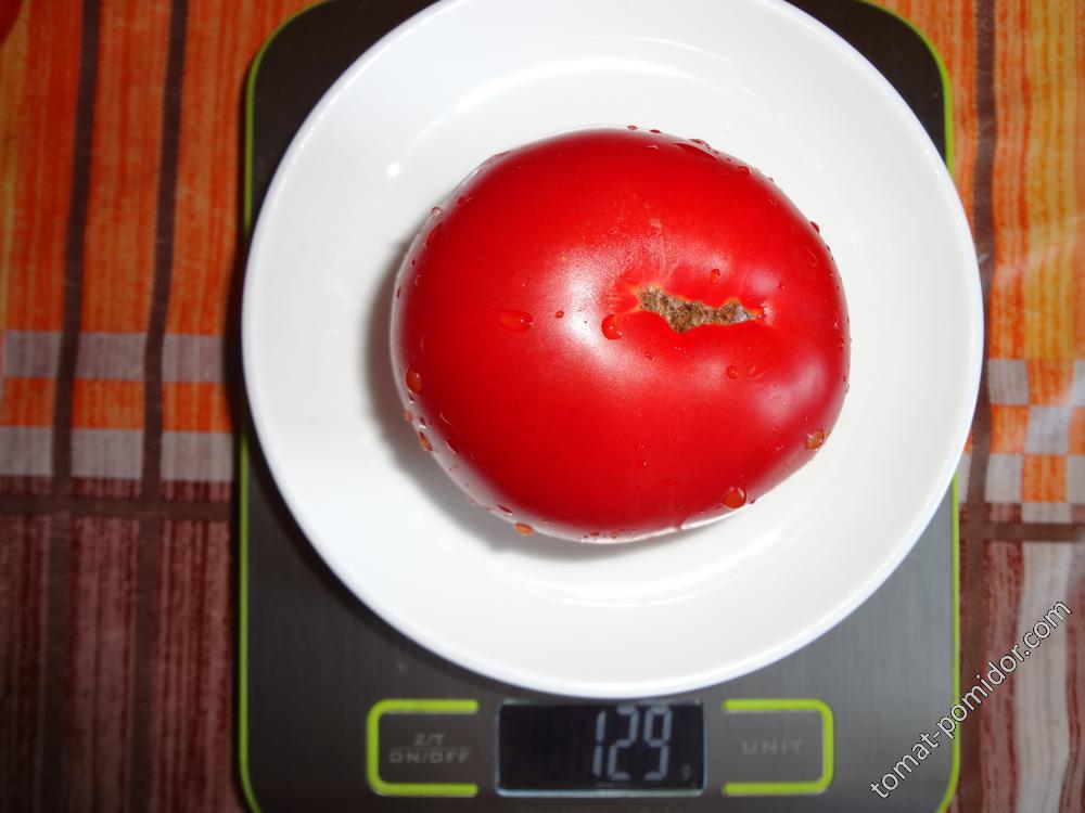 Мимоза вес