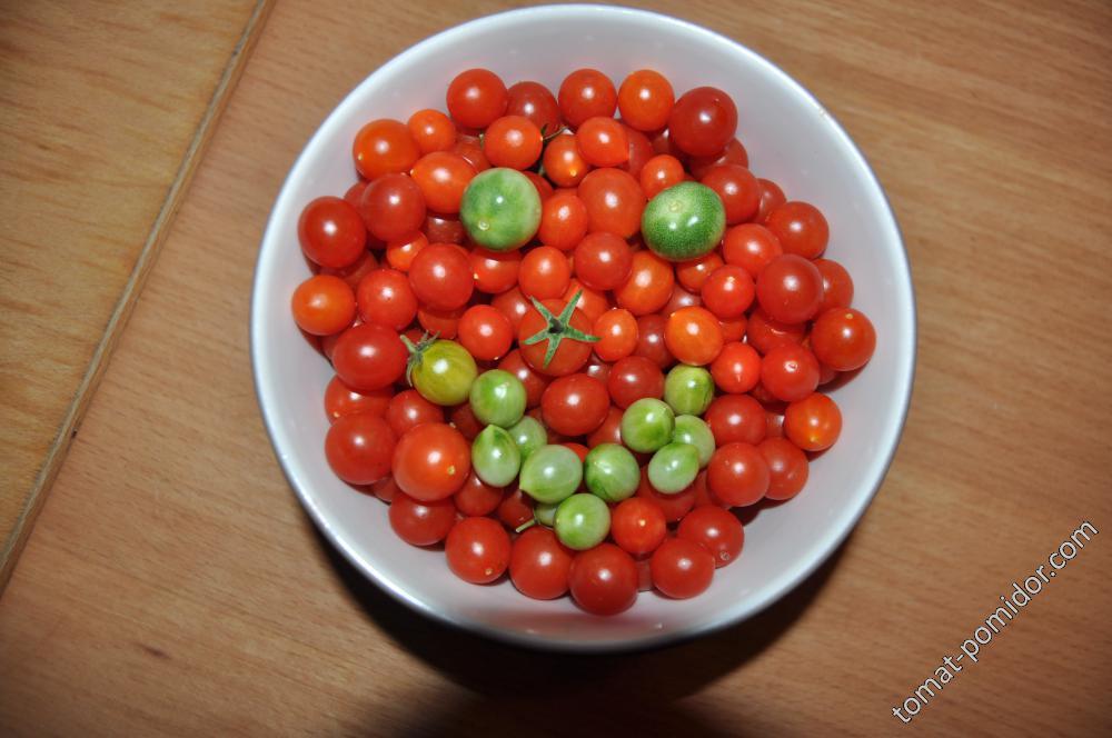 Чудо ягода Ф1,30.08.17
