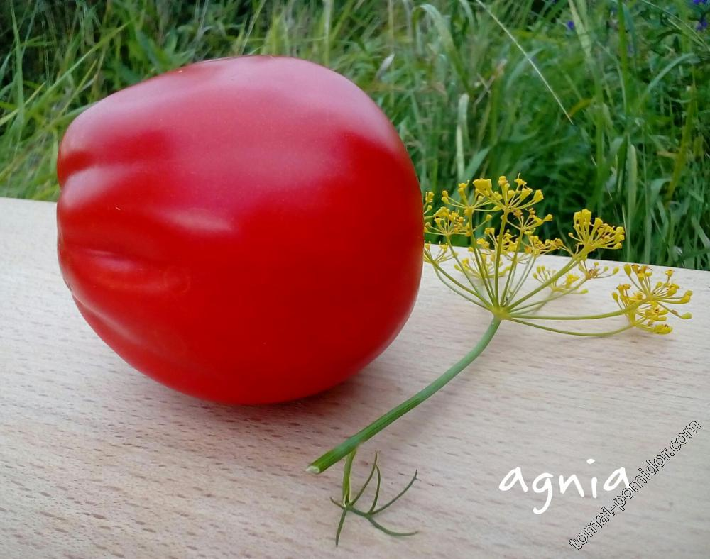 Red Pear (Franchi Sementi)