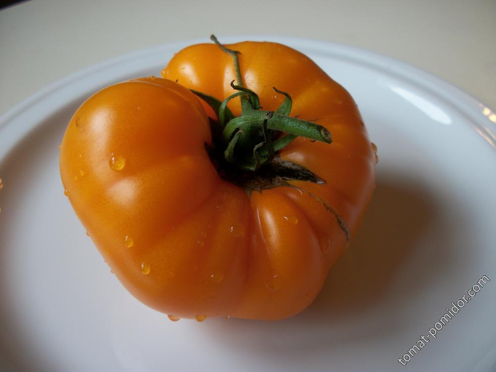 томат Янтарный мёд