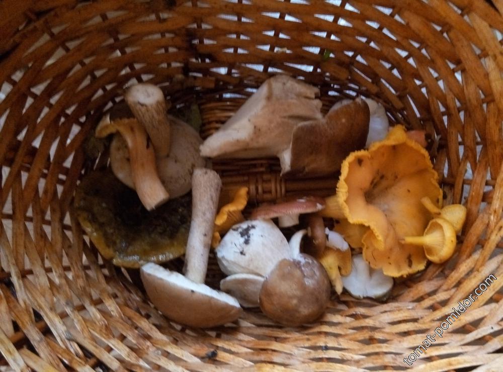 Сходила за грибами...)))