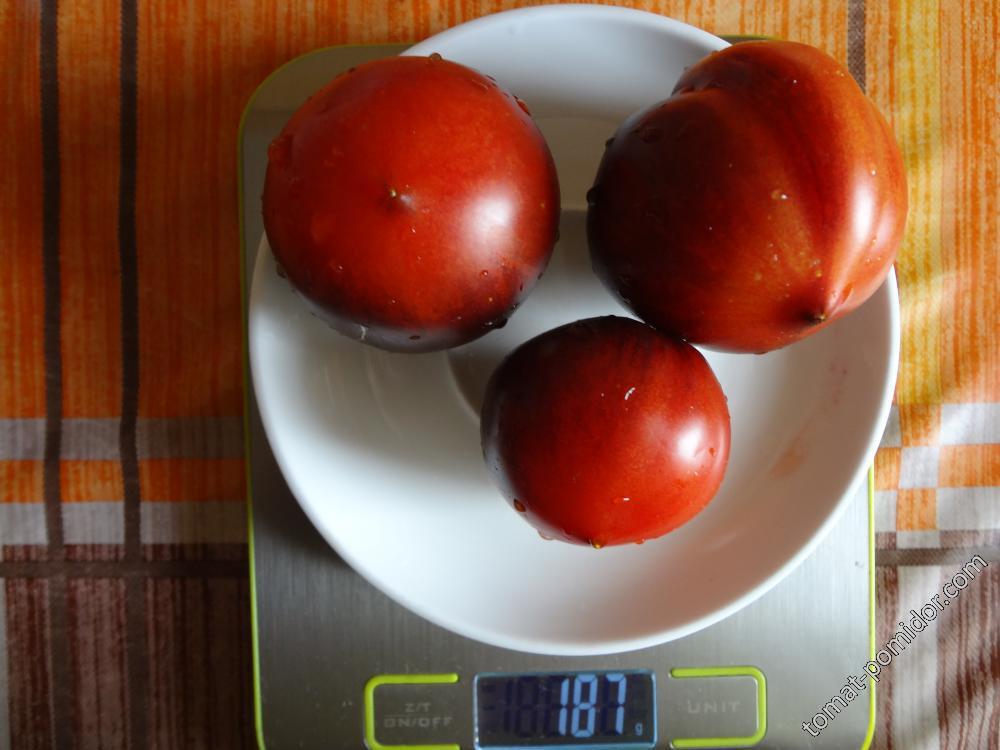 Озарк восход вес