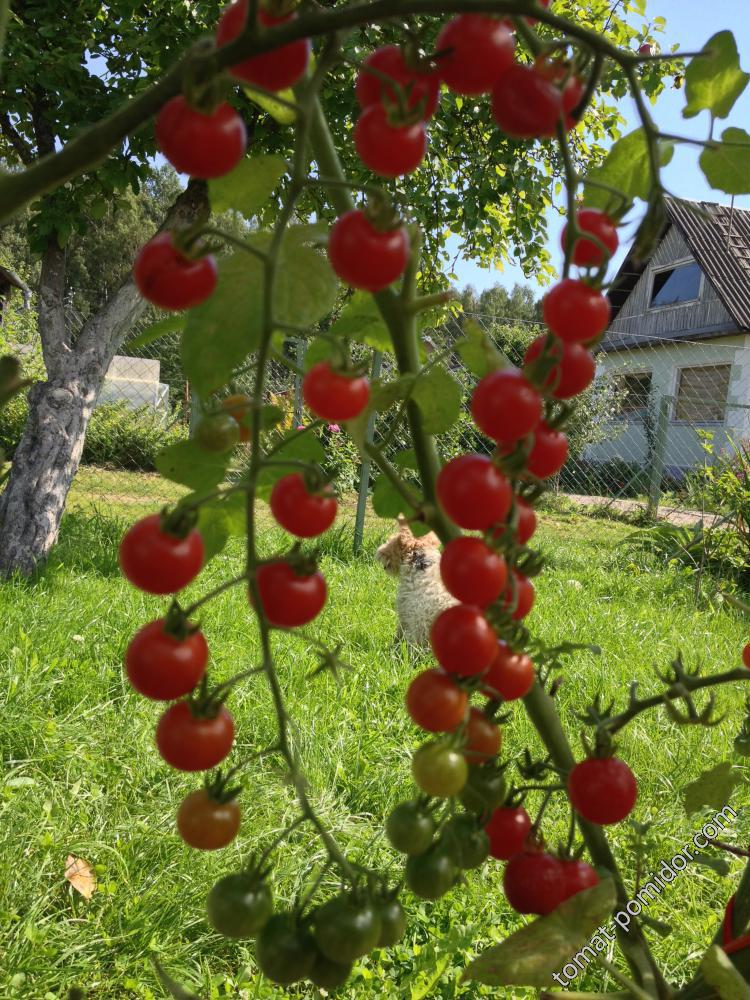 """Iva""""s Red Berry"""