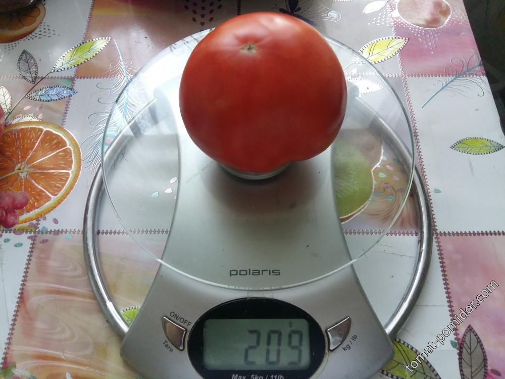 Станица. Идеальный помидор!!!