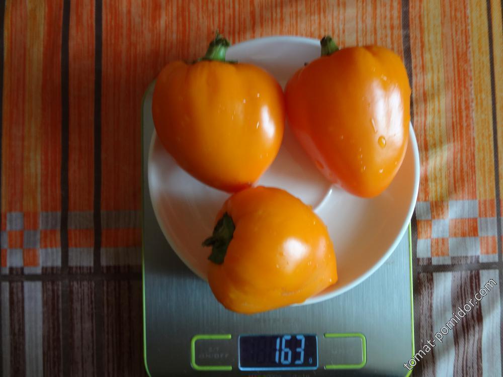 Желтый помидорный (назв. усл.)