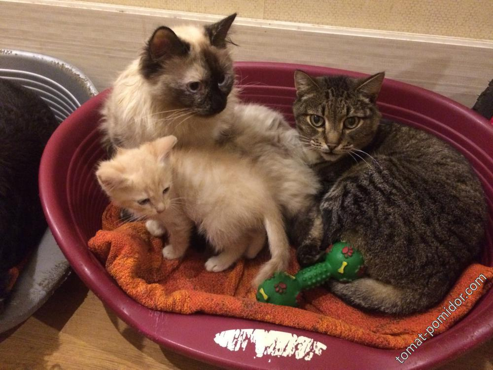 Благочестивое семейство