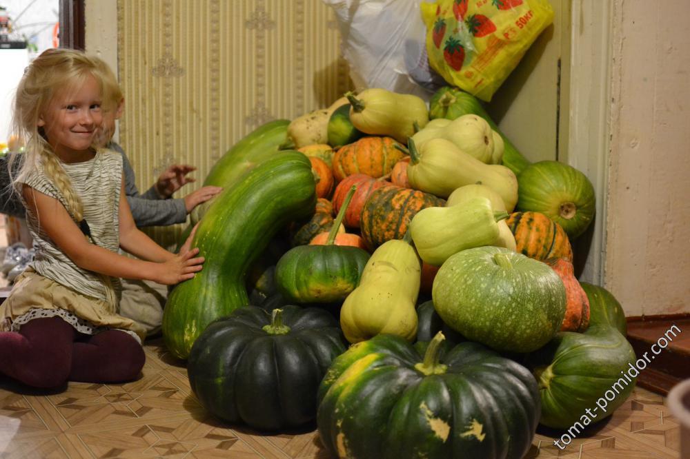 Занесли тыквенный урожай в дом)