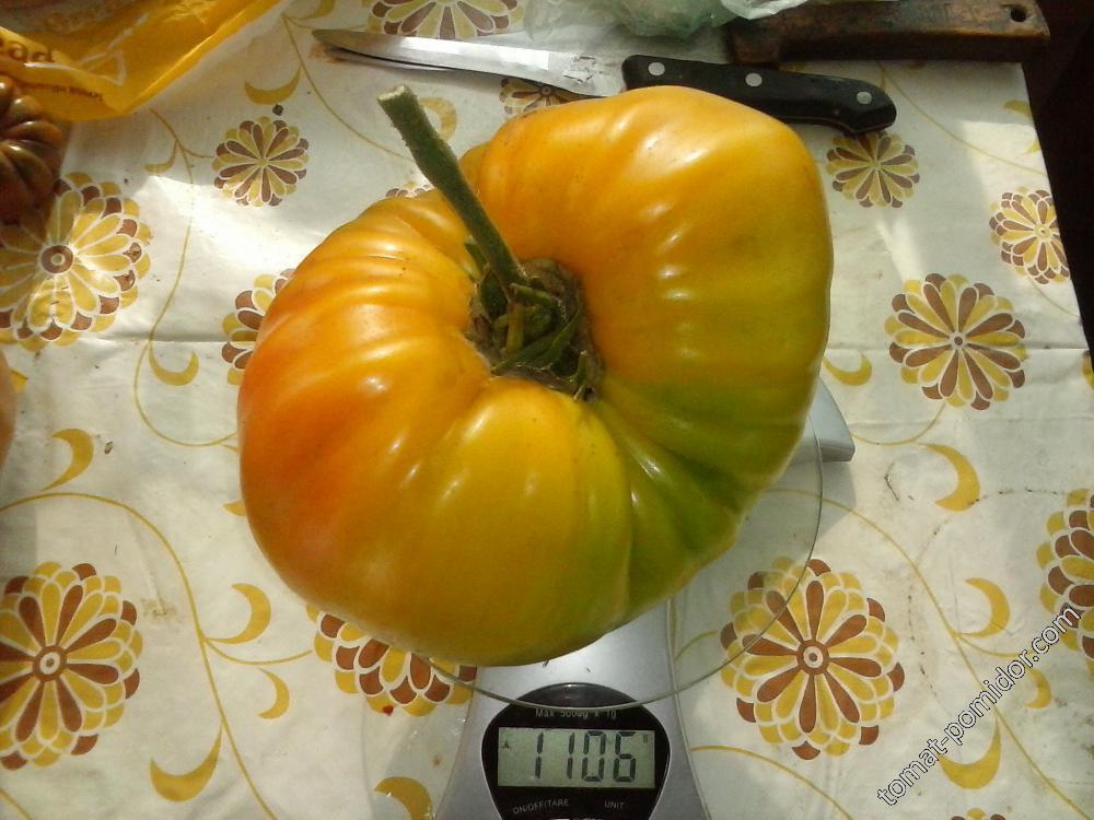 Наконец побит рекорд - плод более кг весом. Оранжевый орангутан
