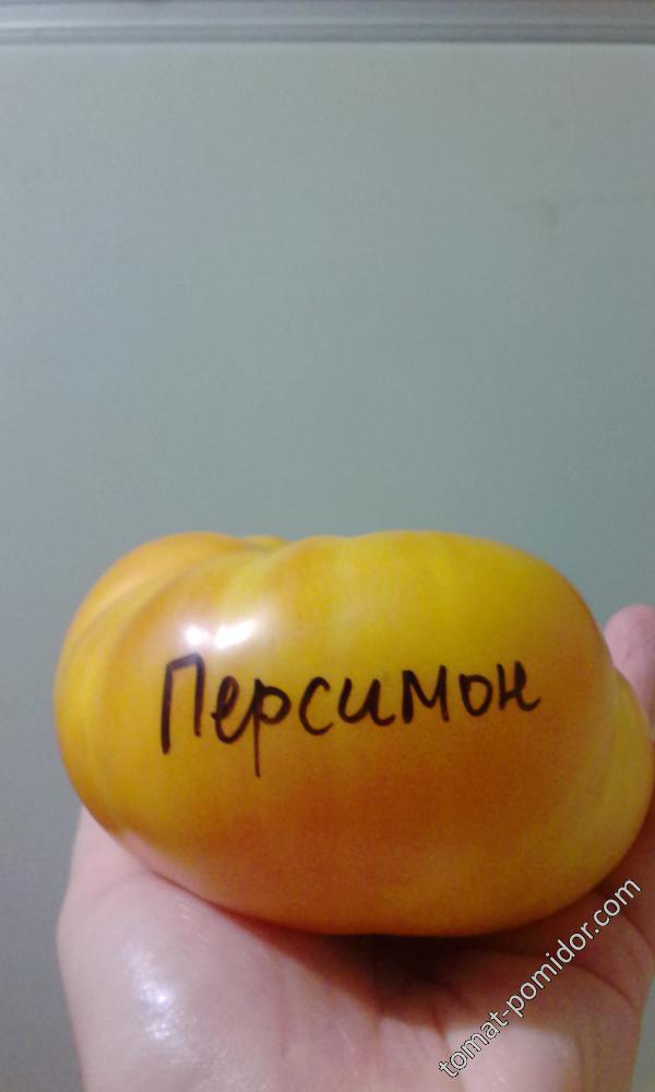 Персимон