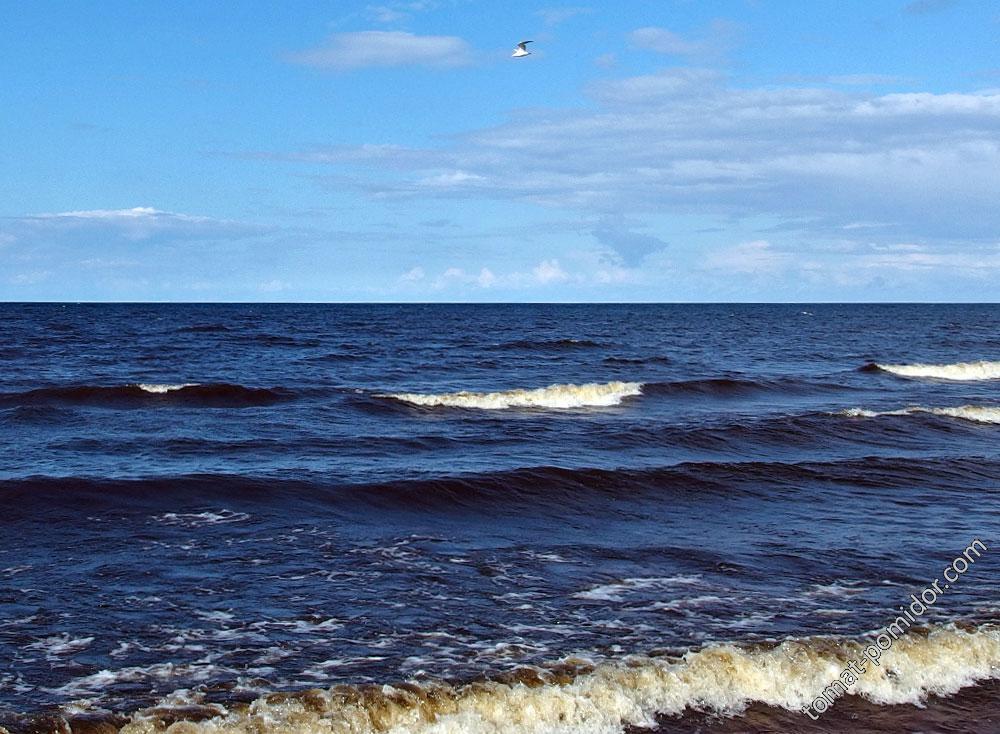 Море Балтийское, средней холодности