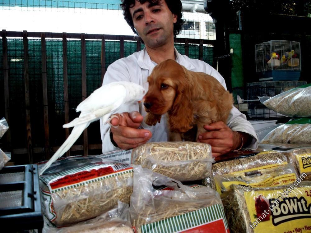 продавец птиц в Париже