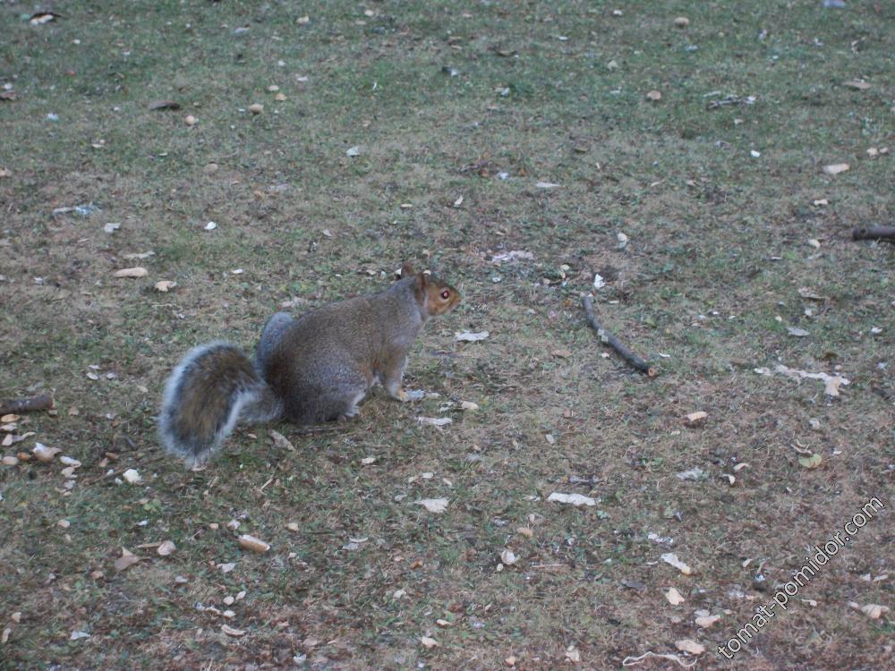 весна в Ричмонд парке