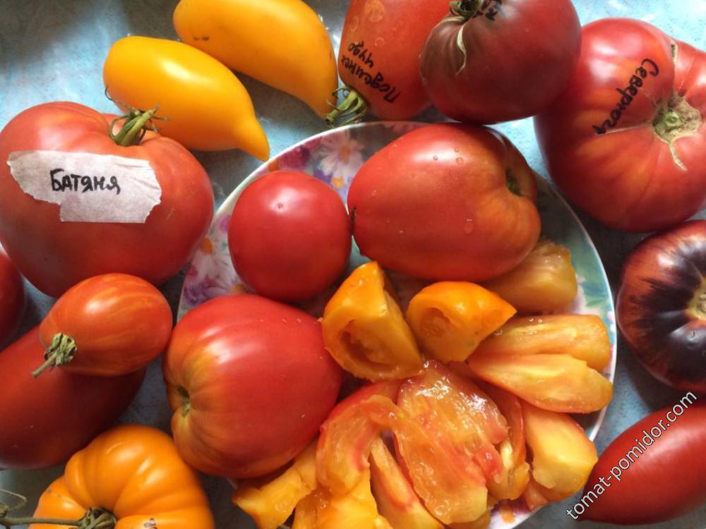 В этой тарелке самые вкусные, сладкие порезанный Оранжевый русский 117 и Батяня