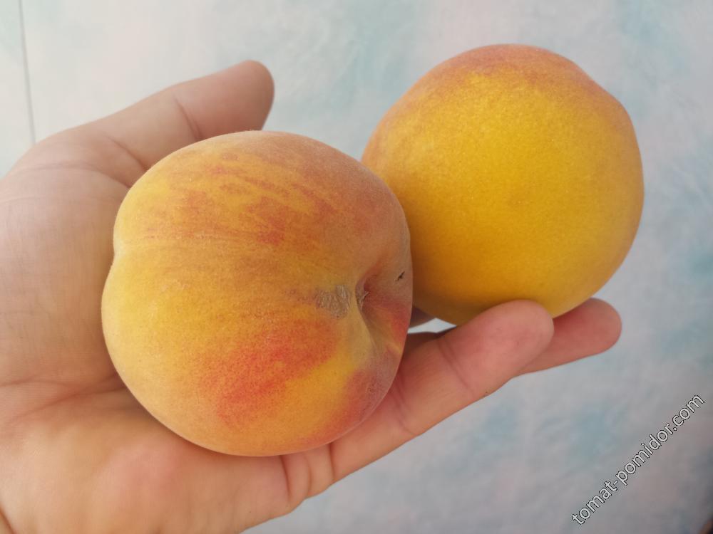 Персики поспели!