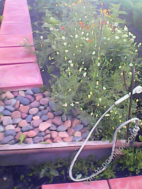 Мойка для ног в огороде
